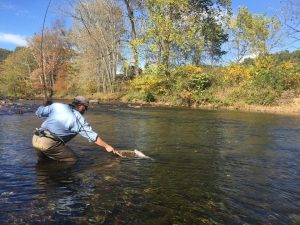 angler netting fish while fishing Big River Farm.